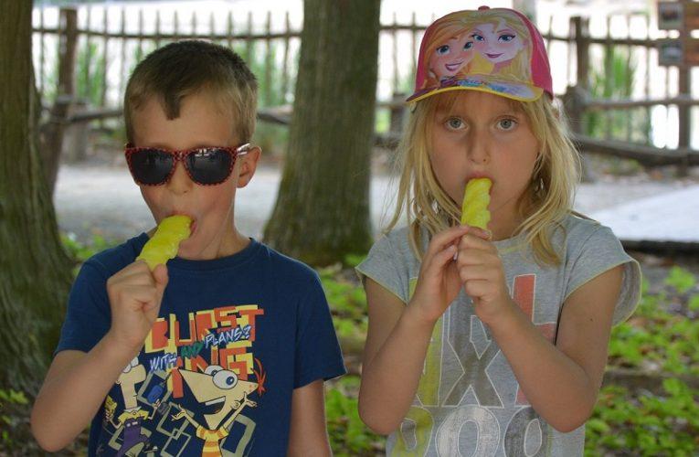 Češi milují točenou zmrzlinu, jen v Globusu se prodává letos o 20 procent víc než loni