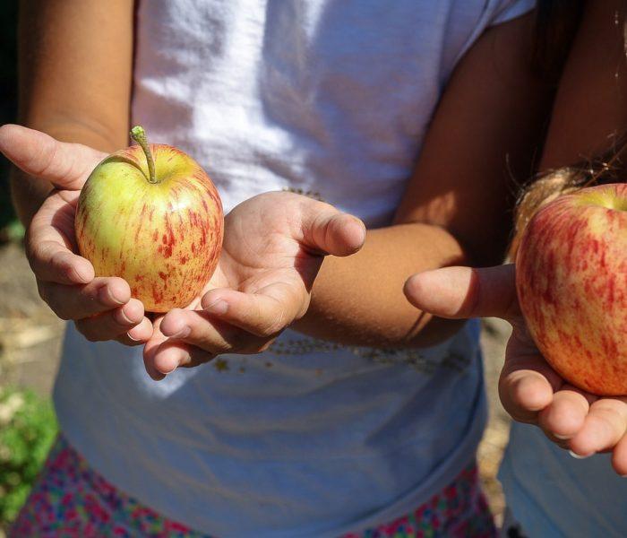 Dětský den oslaví děti v BILLE s jablky z České farmy