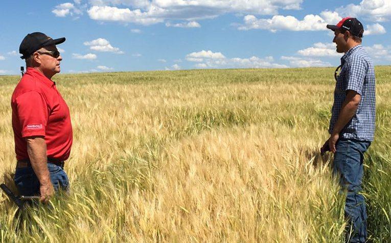 SmartBarley pomáhá zemědělcům proti suchu