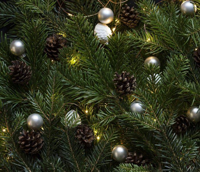 Vánoční stromky nakoupíte před obchody Tesco až do Štědrého dne