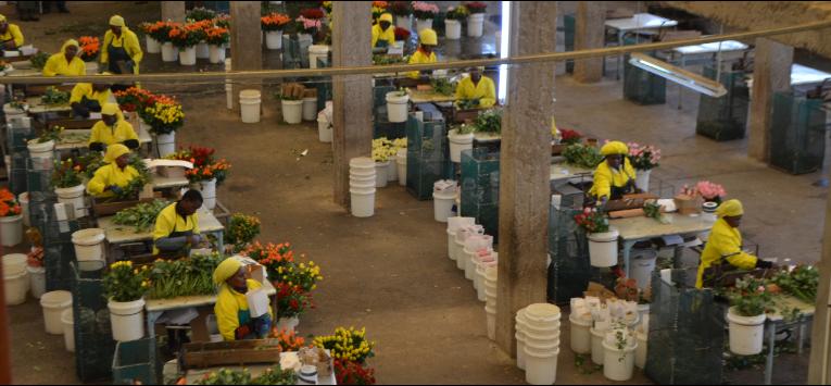 Svatý Valentýn zvyšuje prodeje řezaných květin