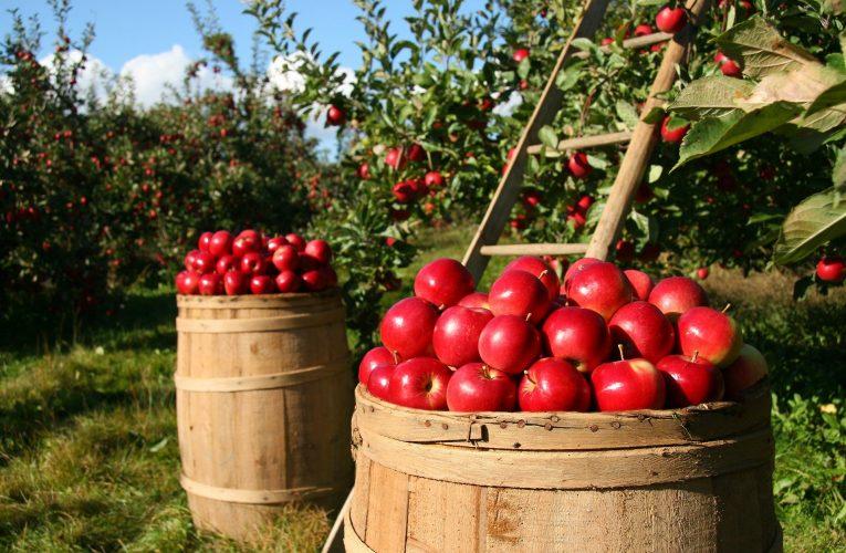 Potravinová soběstačnost v Česku
