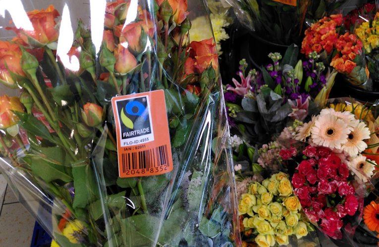 Český obchodní řetězec poprvé nabídne fairtradové květiny