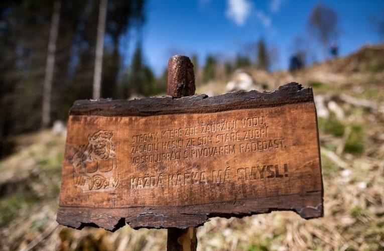 Radegast podpořil výsadbu 7 000 stromů v Beskydech