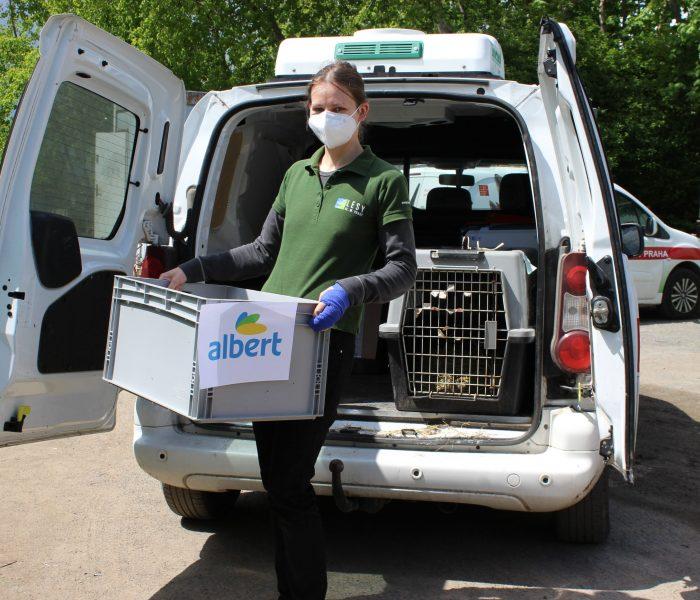 Mrkev, salát či jablka z Alberta pomáhají zvířatům