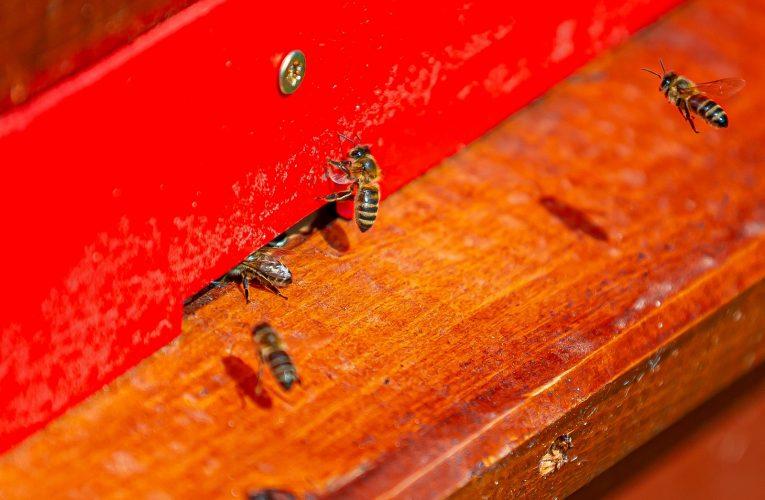 Včely míří do PENNY