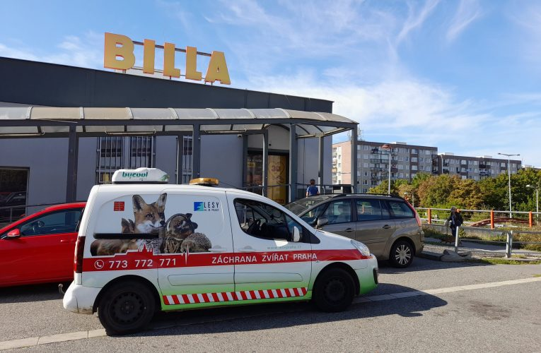 BILLA posiluje spolupráci se záchrannými stanicemi pro volně žijící zvířata